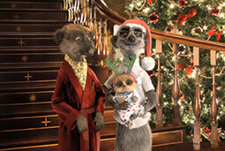 meerkat-christmas-family-photo