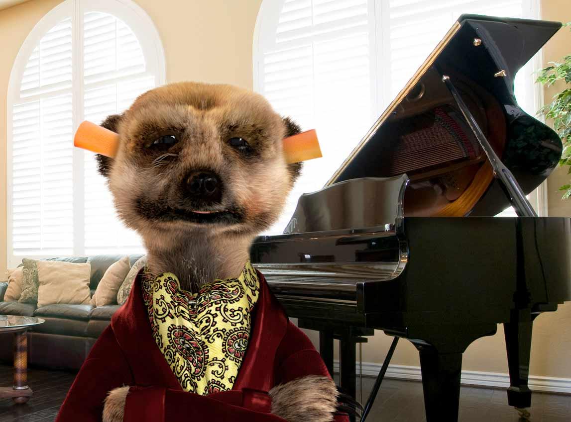 Meerkat earplugs
