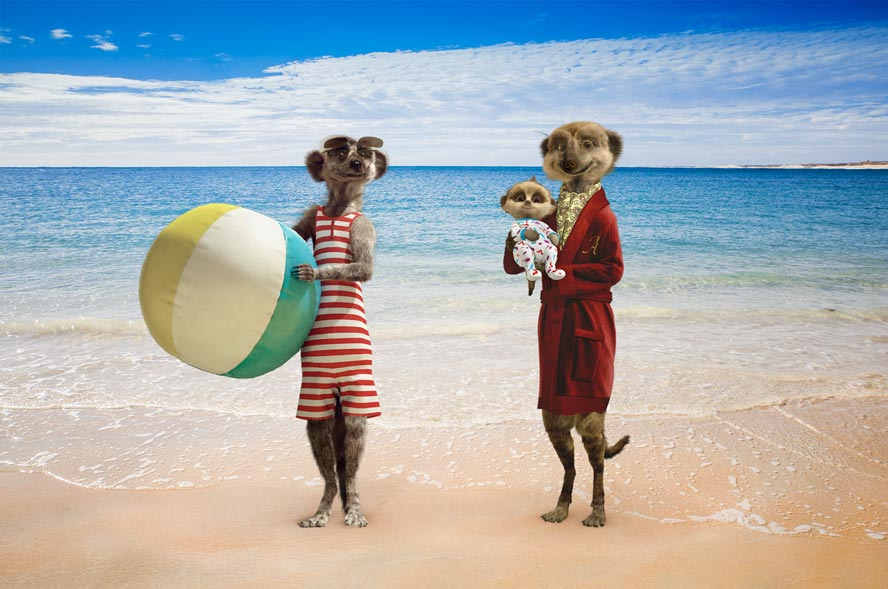 Meerkats at beach