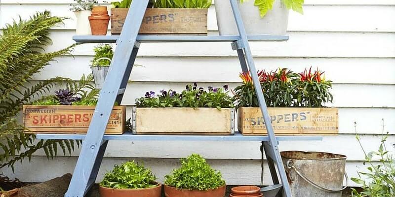 Display plants using a ladder
