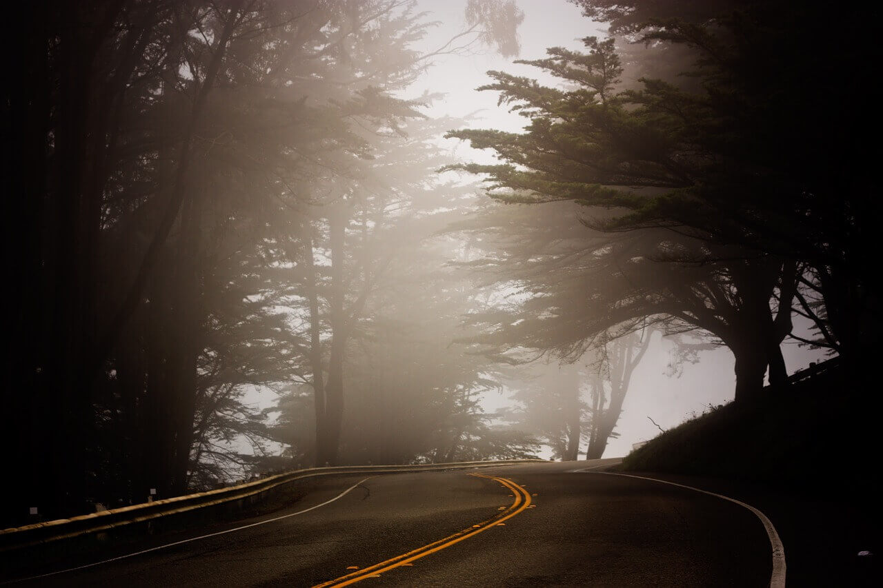 tree and road
