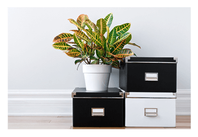plant over boxes in front of a white wall