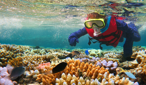 Exploring the Great Barrier Reef