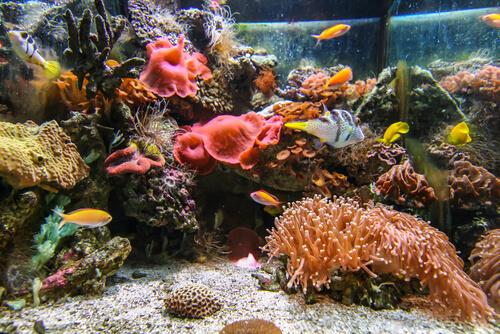 tropical aquarium reef in Reef HQ