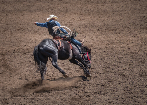 cowboy riding horse in a rodeo