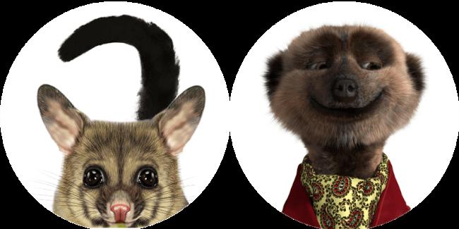 Possum vs Merkat