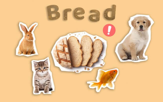 Bread could be harmful to pets such as cats, dogs, fish and rabbits.