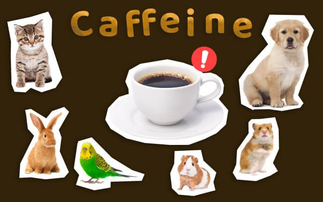 Caffeine could be harmful for cats, dogs, rabbits, birds, hamsters and guinea pigs.