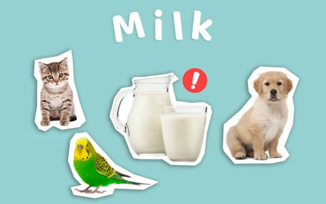 Milk could be harmful to pets such as cats, dogs and birds.
