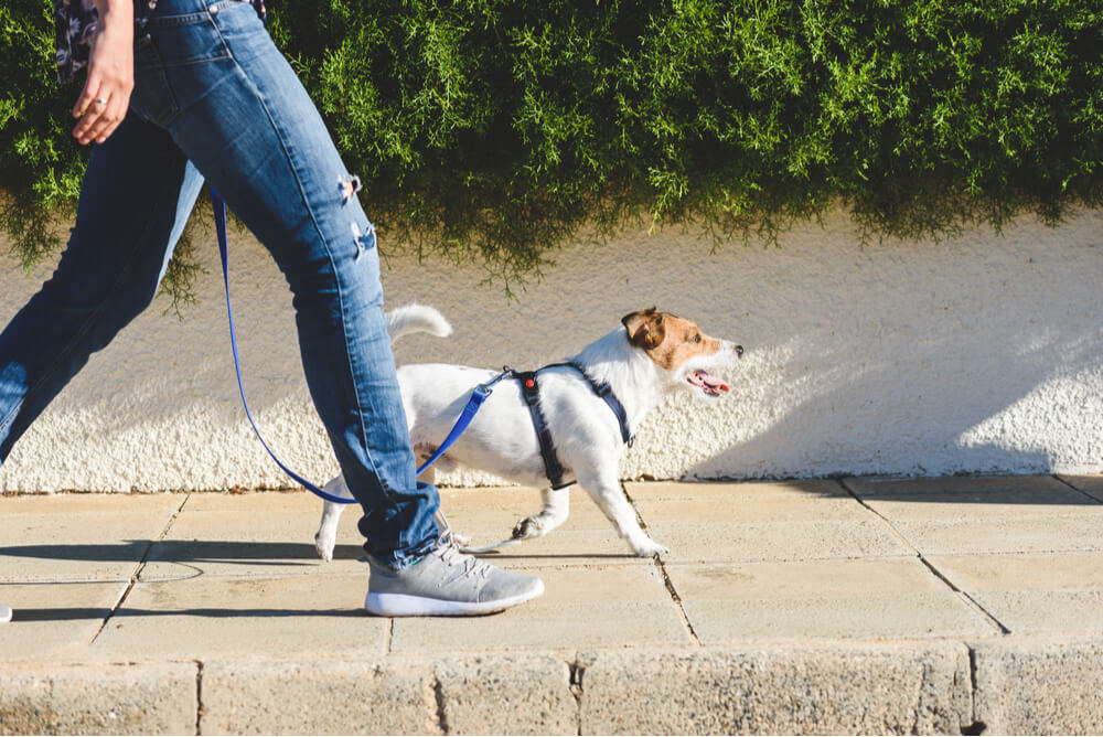 a dog being walked on the pavement