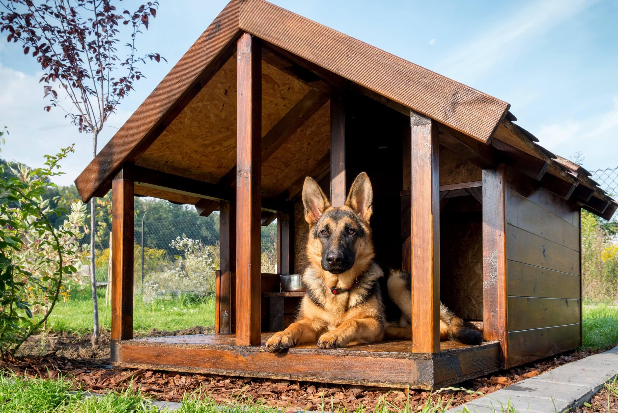 german shepherd dog resting in wooden kennel outdoors