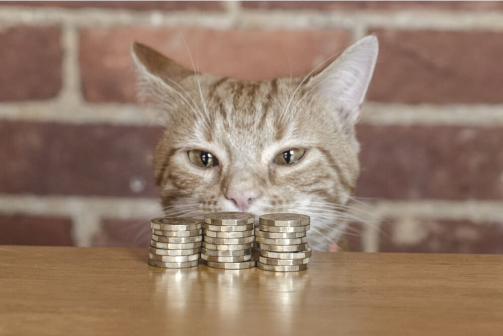 Ginger cat eyeing a pile of coins on a table