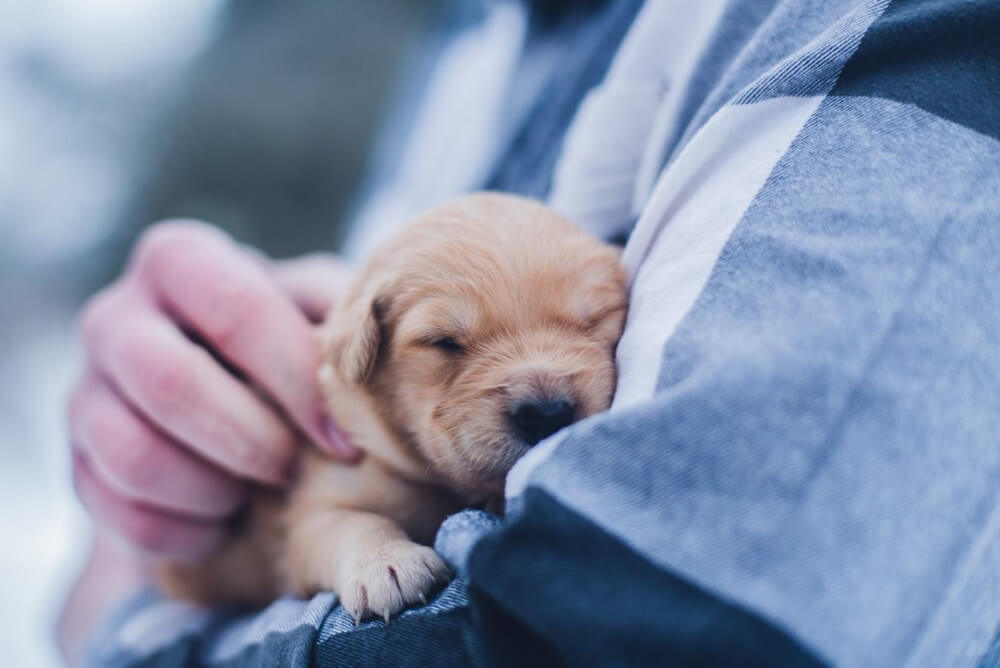 a man holding a young puppy