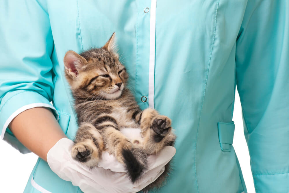 Tabby kitten being held in one hand by a vet