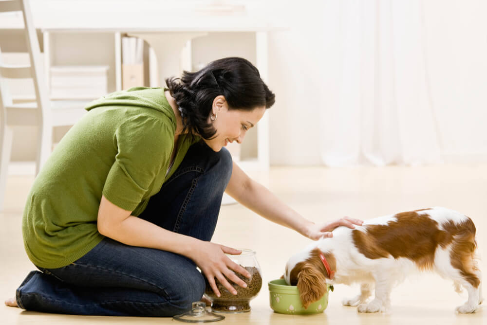 woman feeding her puppy pet food