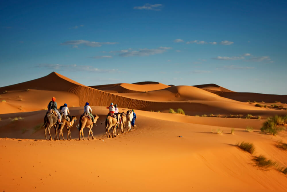 Group travellers with insurance on a camel ride in desert