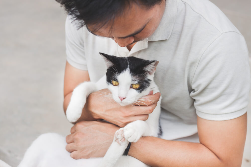 Senior black and white cat with its owner