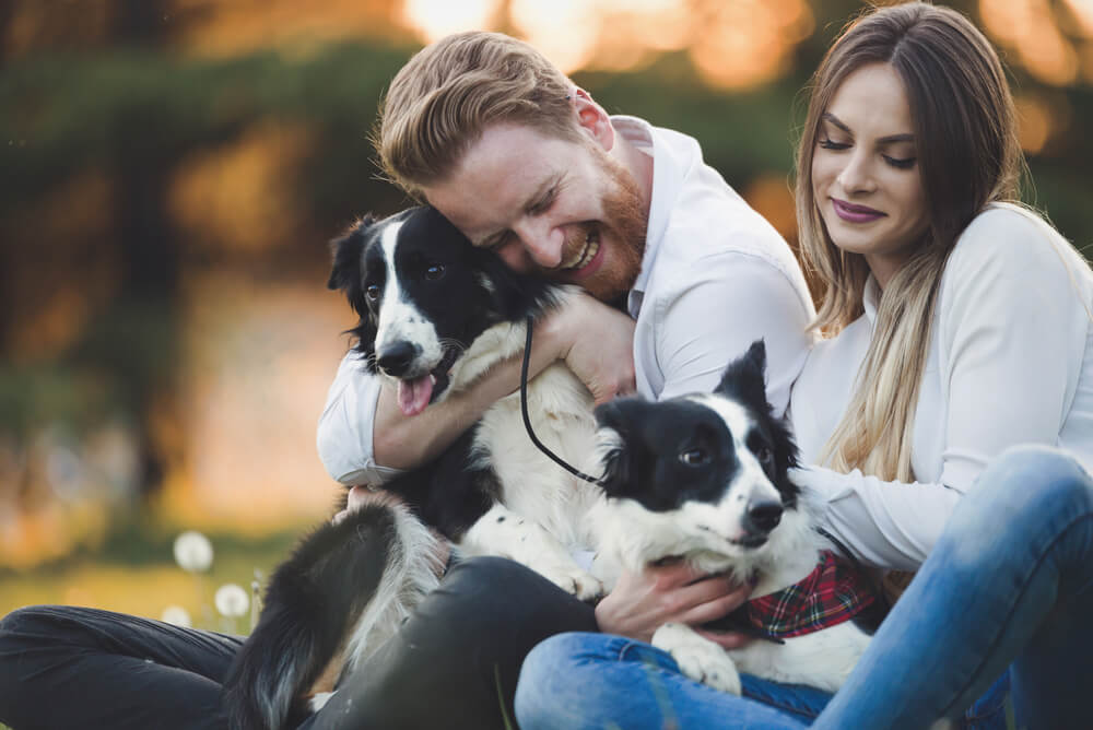 A couple cuddling two Border Collies in the park