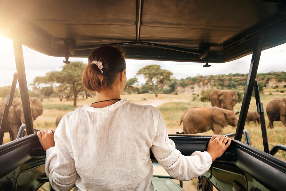 a woman on safari looking at elephants