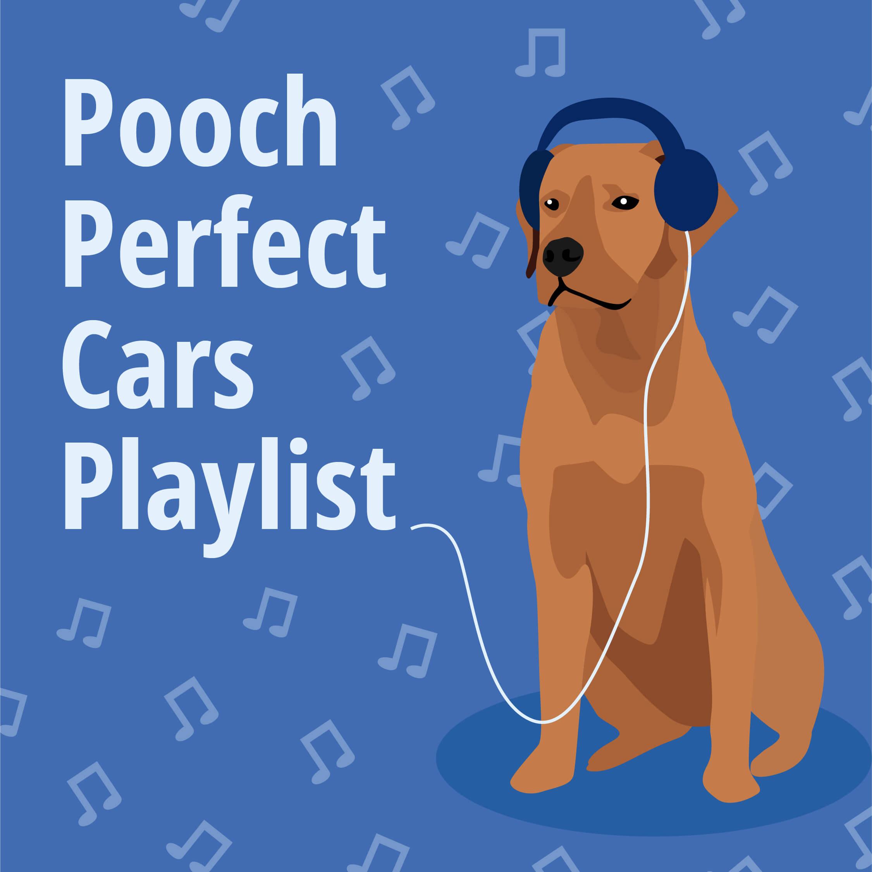 Pooch Playlist on Spotify