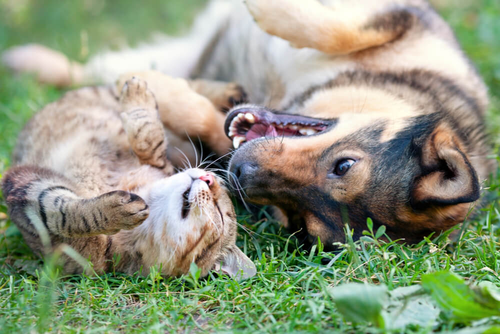 a dog and cat playing together in the grass